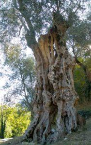La magia dell'olivo – 2010
